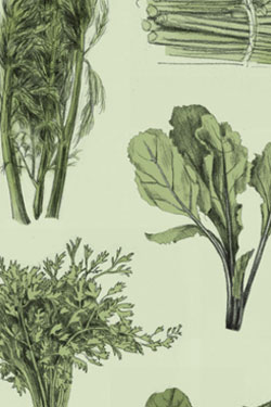 Herbs in many different ways